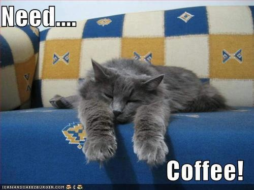 183 Best Coffee Animals Images On Pinterest Adorable