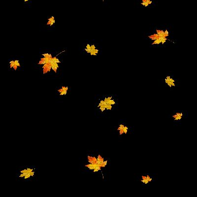 automne leaves falling gif