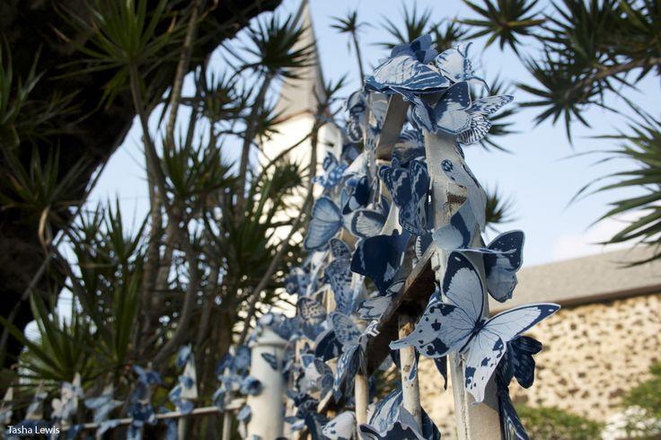imagens borboletas na cidade - Pesquisa Google