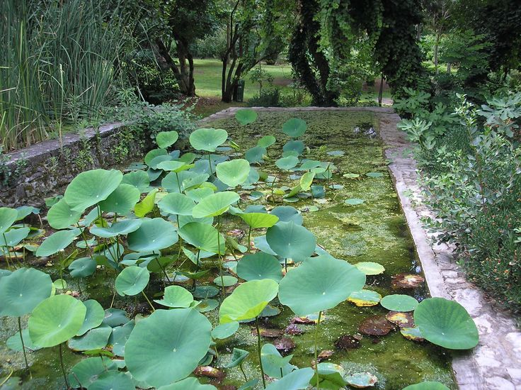 from botanical park in Athens Greece photo by Love Fabric