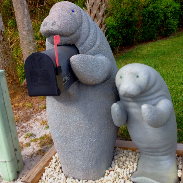 The perfect mailbox! Manatees love mail