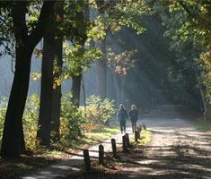 Fietsen, varen en wandelen in de Weerribben