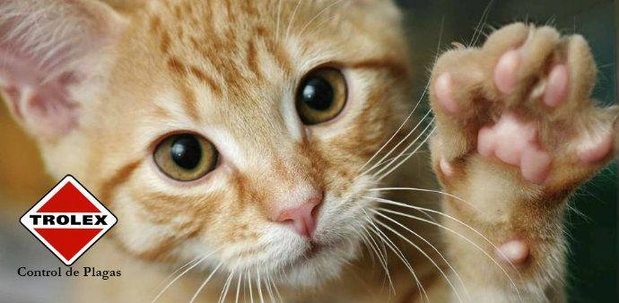 Gatos Callejeros - Trolex  Lo que debe saber sobre los gatos callejeros  Los gatos callejeros se definen como aquellos que han sido separados de una casa o propietario, o que nacieron en la calle.