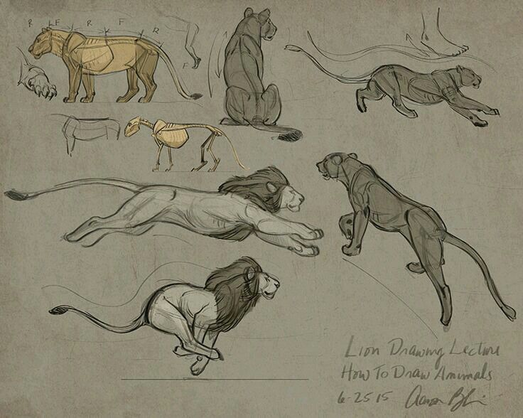 Line Drawing Of Desert Animals : 43 best animals images on pinterest animal anatomy drawing