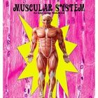 Muscular System Interactive Notebook, 26 pages, information, activities, foldables, project idea, vocabulary, quizzes and answer keys, body systems...