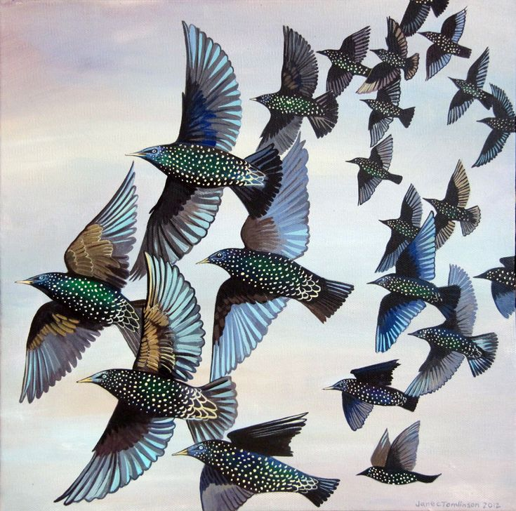 Murmuration: 42 Best Images About Paintings By Jane Tomlinson On