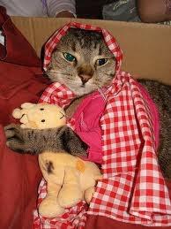 Il gatto in casa.  lo so che al tuo gatto vuoi un bene dell'anima e cerchi di dargli tutto quel che puoi: cibo, acqua, calore, giochi, compagnia, coccole ed accessori vari; forse lo fai perfino dormire sul letto o sul divano. Il modo in cui tu lo tratti è per te motivo di gioia. E' meraviglioso prendersi cura di un animaletto indifeso che per vivere ha bisogno della tua assistenza. http://wp.me/p1Uv35-2t