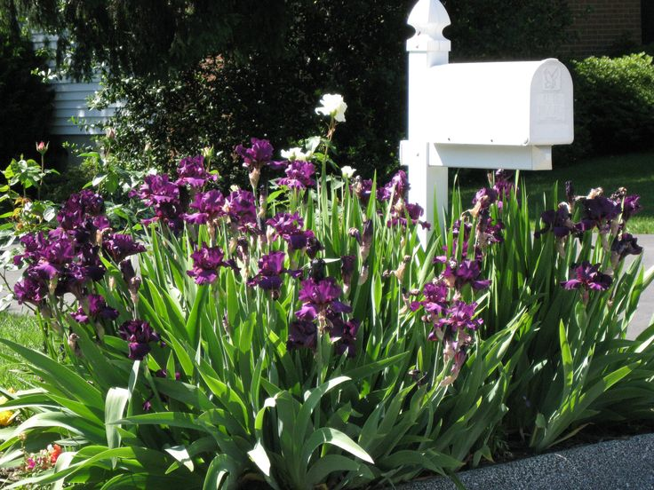 Mailbox garden ideas mailbox garden idea 3 a simple iris for Irish garden designs