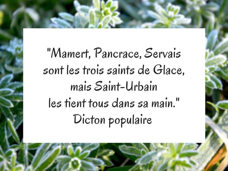 dicton populaire Saints de Glace