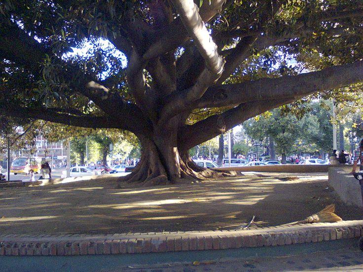 Plaza Victoria. Valparaíso. Chile.
