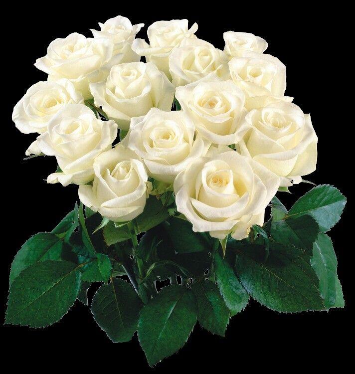 Открытки белые розы с днем рождения женщине, для открытки