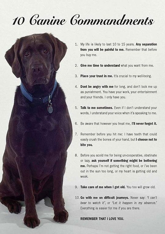 I wish this would be given to everyone who decides to get a dog.