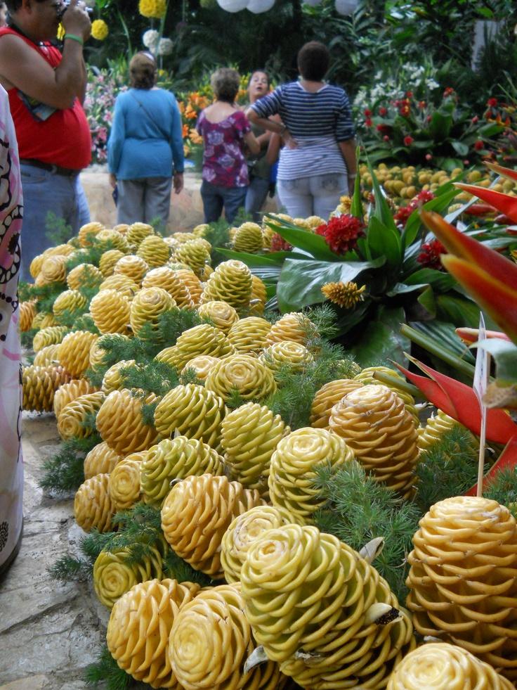 Jardin Botanico, Feria de las Flores, Medelin Colombia