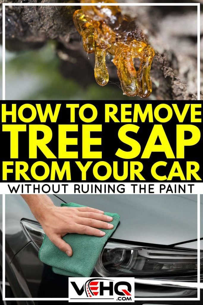 How To Remove Tree Sap From Your Car Without Ruining The Paint