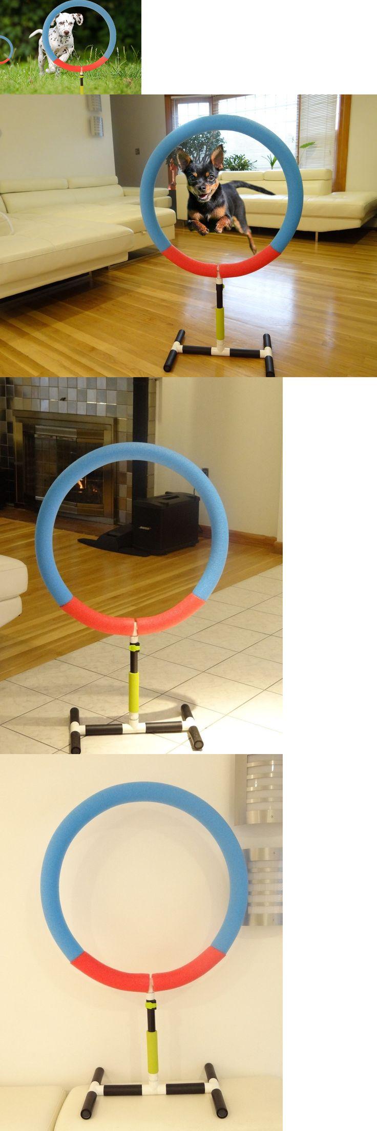 Agility training 116383 dog agility training hoop jump