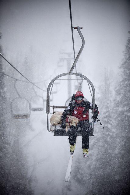 lift_7_dog-bk by Colorado Ski Country, USA, via Flickr. Good rescue doggie!:)