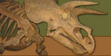 Where Did They Live?  Studying Biogeography  http://paleobiology.si.edu/dinosaurs/info/everything/where.html