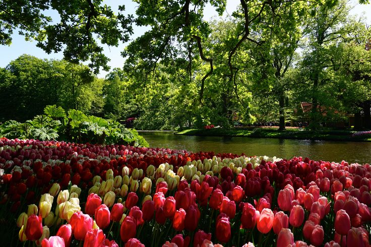 Keukenhof Netherlands, flower garden - Photo: Claartje Michels