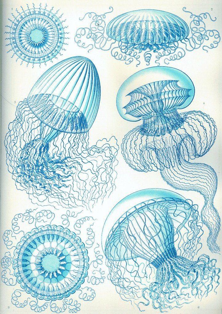 Эрнст Геккель «Красота форм в природе»