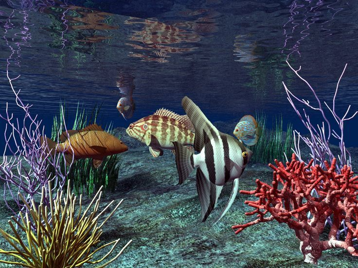 Fish Aquarium Live Wallpaper Free Download For Pc In 2020 Animated Wallpaper For Pc Live Wallpaper For Pc 3d Animation Wallpaper