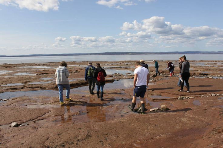 Burntcoat Head Park on the Minas Basin has the highest tides in the world.