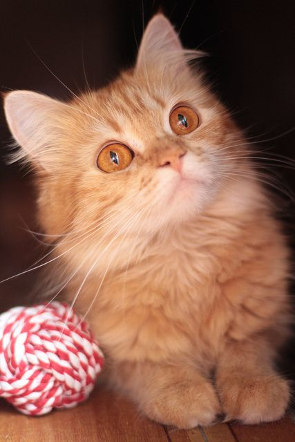 89cats:  big amber eyes by deadoll on Flickr.