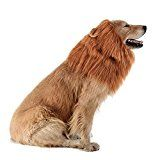 Review for Iccker Dog Costume Lion Mane for Large Dog - Hilarious Realistic ROFL Halloween... - Ami Vanderhoff  - Blog Booster