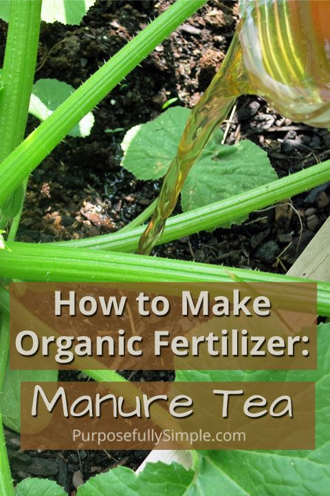 How to make organic fertilizer manure tea gardens the - When to fertilize vegetable garden ...