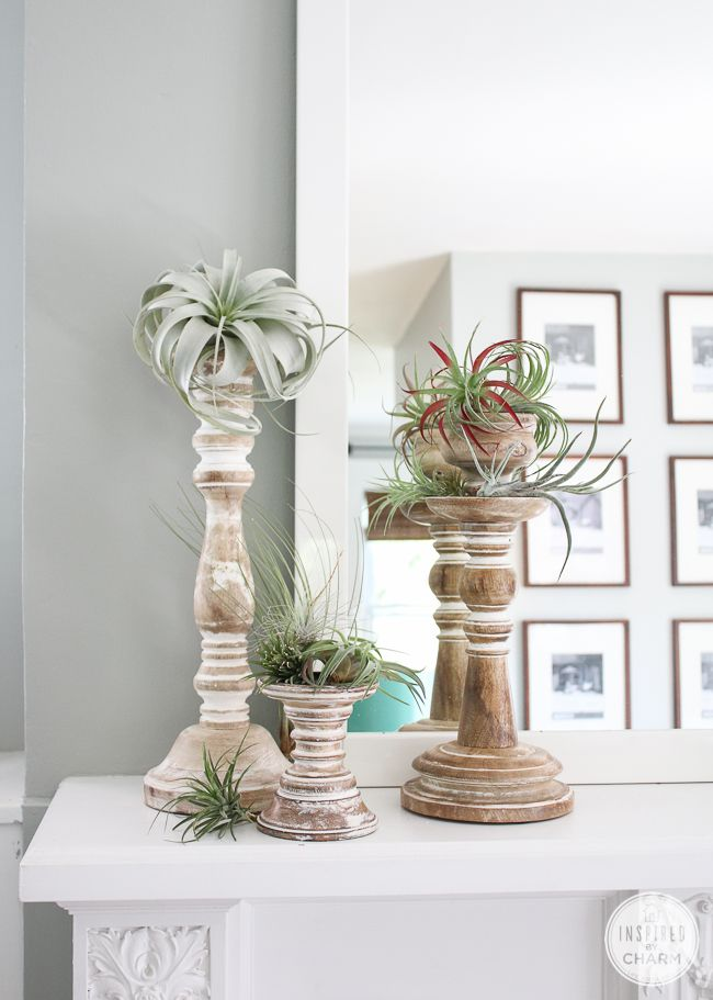 25 best ideas about air plant display on pinterest air for Air plant decoration