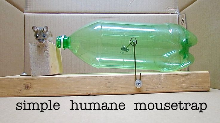 If you find yourself with an uninvited mouse guest and want a humane solution to catch the critter, you can easily make a non-lethal trap with just a soda bottle mounted on a pivot.