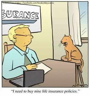 Cat Humor | I need to buy nine life insurance policies please! | Created by Nate Fakes | From Funny Technology on Google Plus