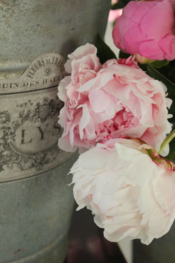 ZsaZsa Bellagio: countryPink Flower, French Interiors, Shabby Chic, Provence Gardens, French Country, Fleas Marketing Finding, Vintage Gardens, Trouvais Peonies, Pink Peonies