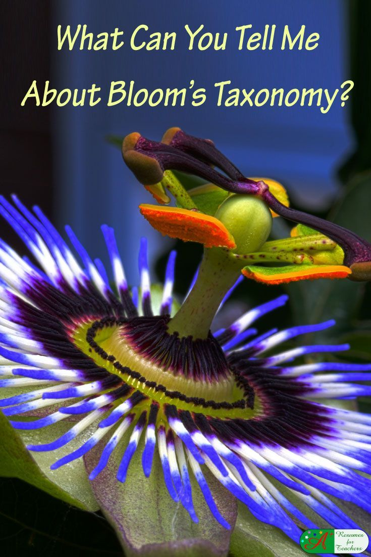 What Can You Tell Me About Bloom's Taxonomy?  You may have heard the term, Bloom's Taxonomy, but maybe you never thought about what you would say if someone asked you to describe what it is or your thoughts on the subject. You may as well take care of that right now before being stumped in a teacher job interview by reading about it now. via @https://www.pinterest.com/candacedavies1/