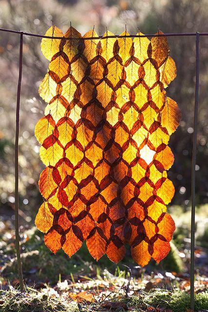 Autumn Beech Leaf Curtain - After a Month by escher is still alive, via Flickr