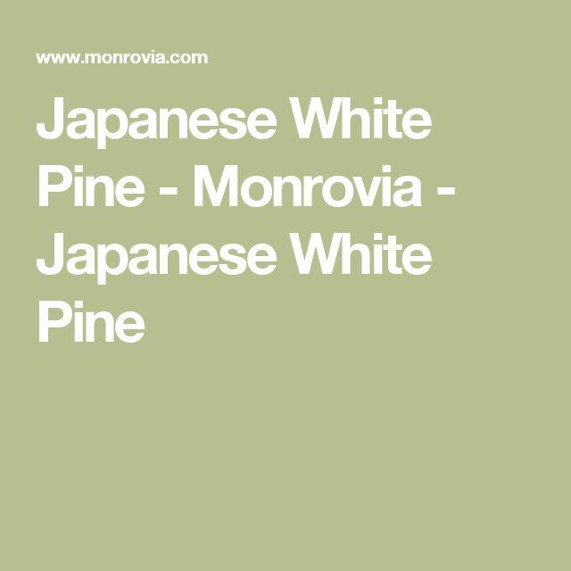 Japanese White Pine - Monrovia - Japanese White Pine