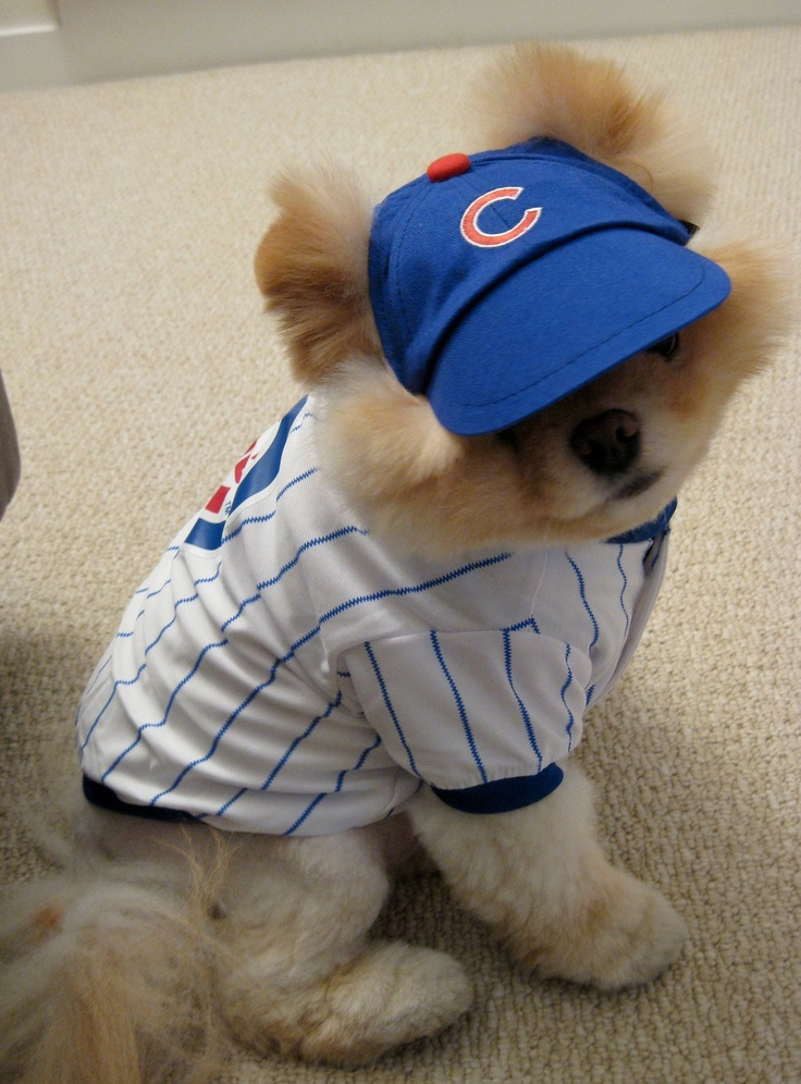 1000 Images About Boo The Cutest Dog On Pinterest