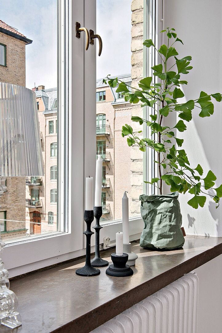 Lovely plant decoration window decor