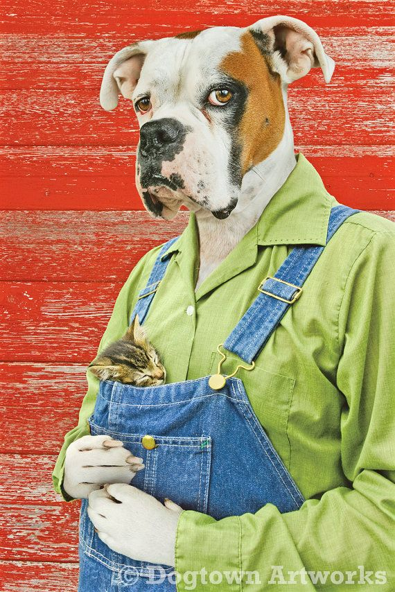 Friends, large original photograph of white boxer dog holding a sleeping kitten in his overalls