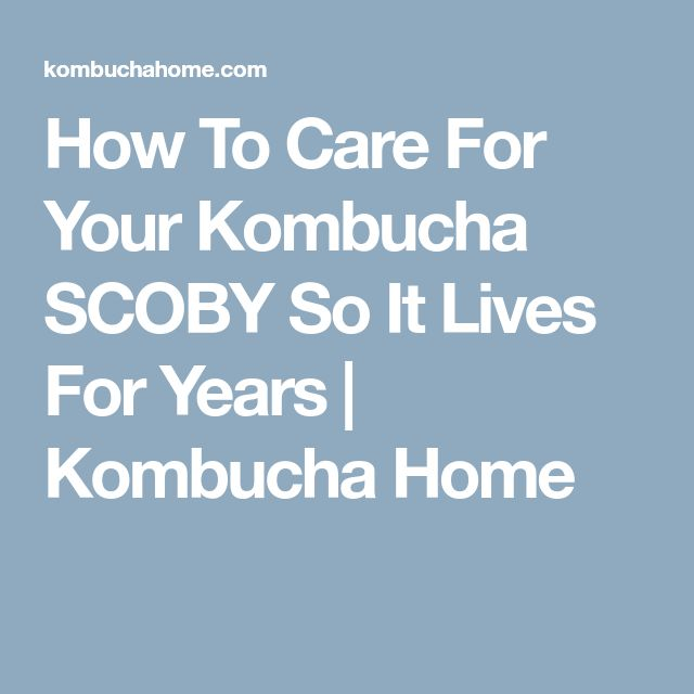 How To Care For Your Kombucha SCOBY So It Lives For Years | Kombucha Home
