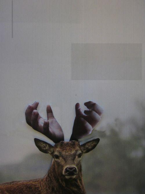 Deer (hert) photo collage by Jessica van der Burg #animals #abc
