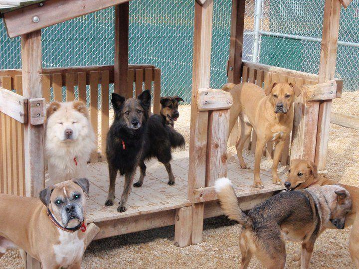 114 Best Dog Daycare Ideas Images On Pinterest Dog
