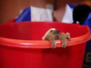 아기 나무늘보.gif | 유머 게시판 | 루리웹 모바일
