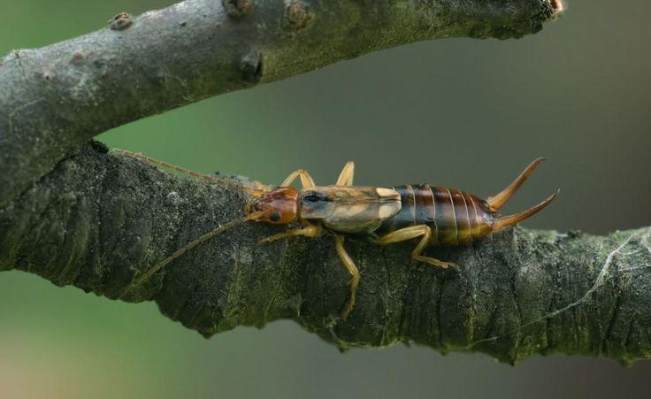 88 besten insekten bilder auf pinterest insekten garten. Black Bedroom Furniture Sets. Home Design Ideas