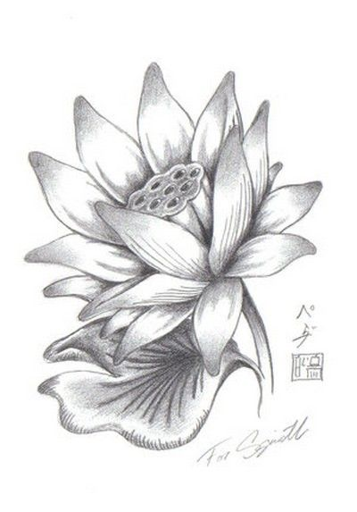 Lotus Flower Drawings for Tattoos | ... more tattoos pictures under lotus tattoos html code for tattoo picture