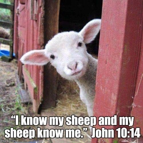 "John 10:14 ""I am the fine shepherd. I know my sheep and my sheep know me,""  https://www.jw.org/en/publications/bible/nwt/books/john/10/"