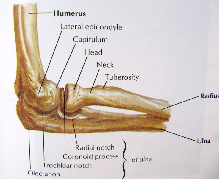 Notes On Anatomy And Physiology The Elbow Manual Guide