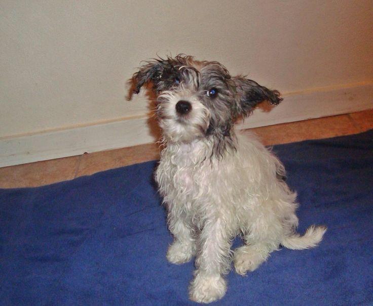 Louis after bath