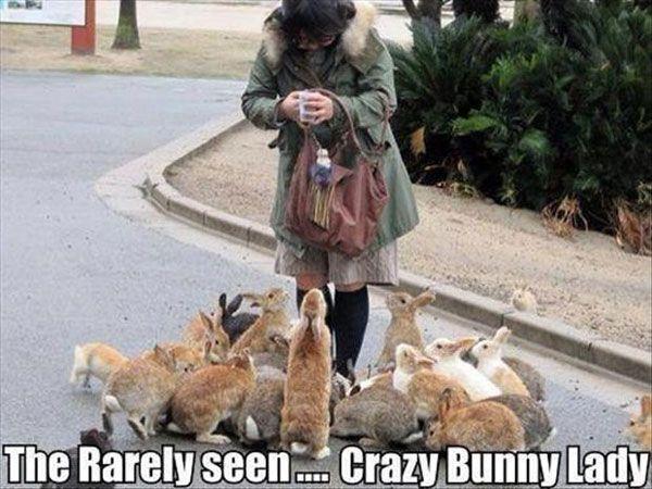 49 best Wild Animal Humor images on Pinterest | Funny ...