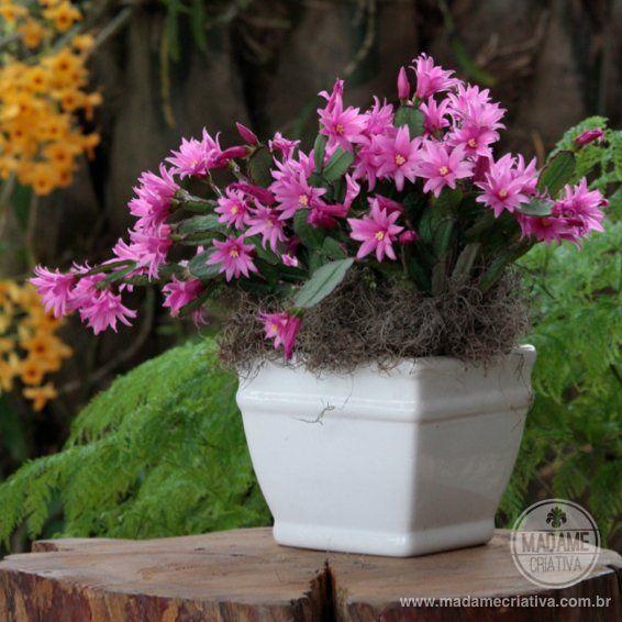 Como fazer mudas de flor de maio e flor de Ooutubro - Dicas de como cuidar - Tutorial - How to - Madame Criativa - www.madamecriativa.com.br...