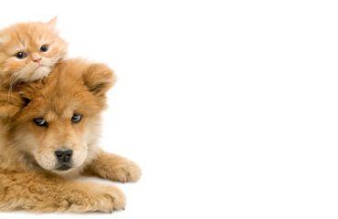 Home Pet shop, Buy dog food online, Pets